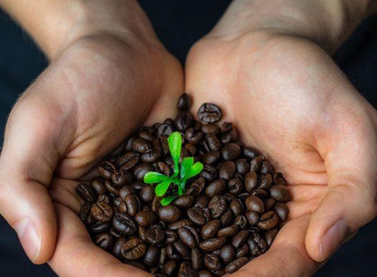 Apeldoorn is nu officieel een 'fair trade' gemeente. Wat houdt dat in?
