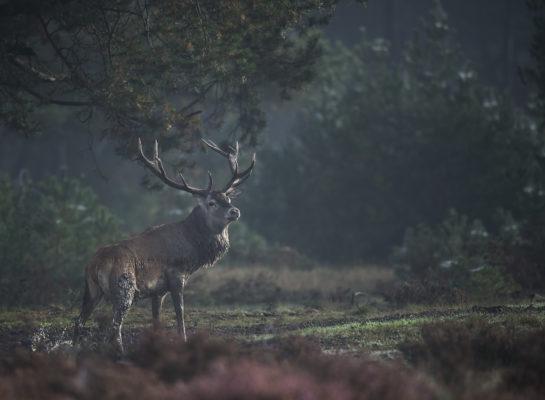 Wildkijkschermen Veluwe