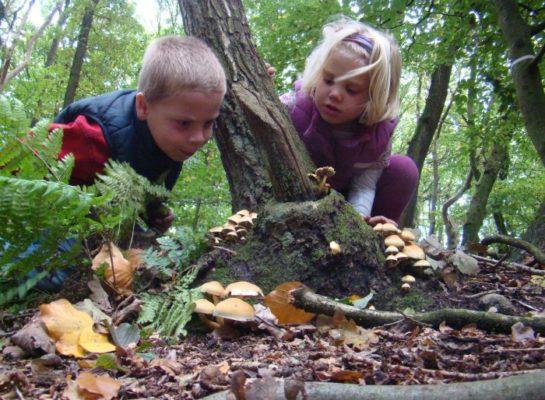 Herfst challenge: 2 uur per week de natuur in